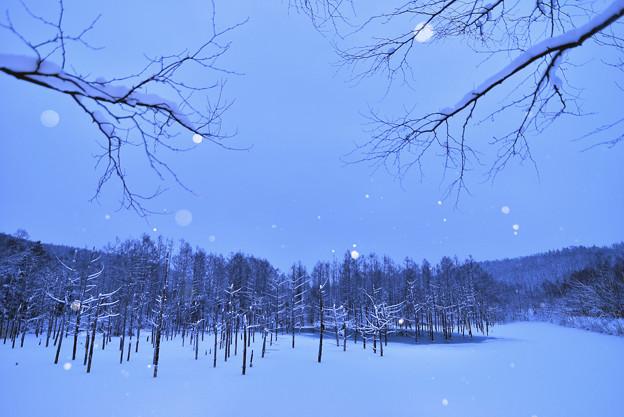 写真: 北海道 美瑛。青池
