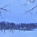 写真: 北海道|美瑛。青池