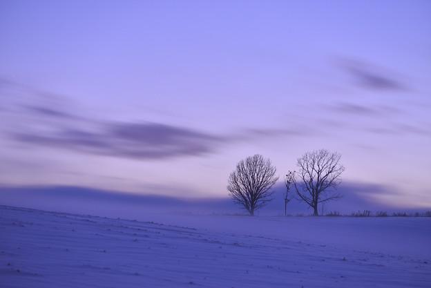 写真: 北海道 美瑛。親子の樹