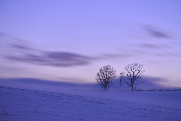 北海道|美瑛。親子の樹