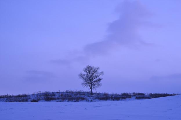 写真: 北海道 美瑛。他人の樹