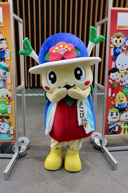 よこぴー (千葉県横芝光町)