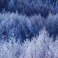 写真: 凍林