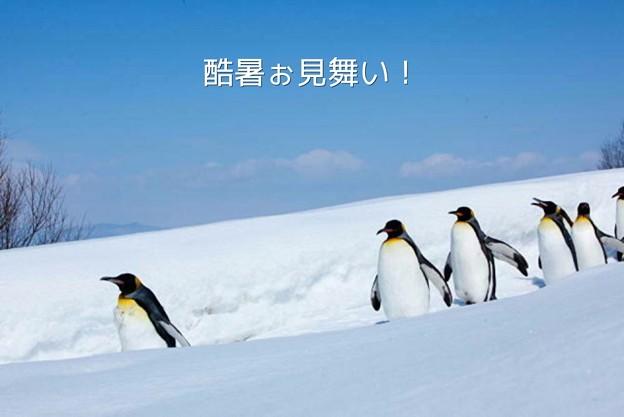 Photos: 酷暑ぉ見舞い!