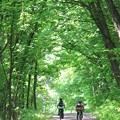 Photos: 裏山の道