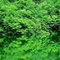 Photos: 緑走る