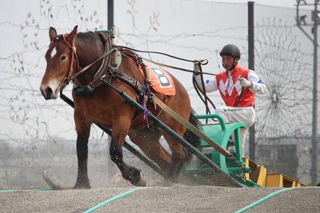2019.04.14 4R合格馬 #フレイムサクラ 2 #ばんえい競馬