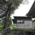 代太郎のお宮3
