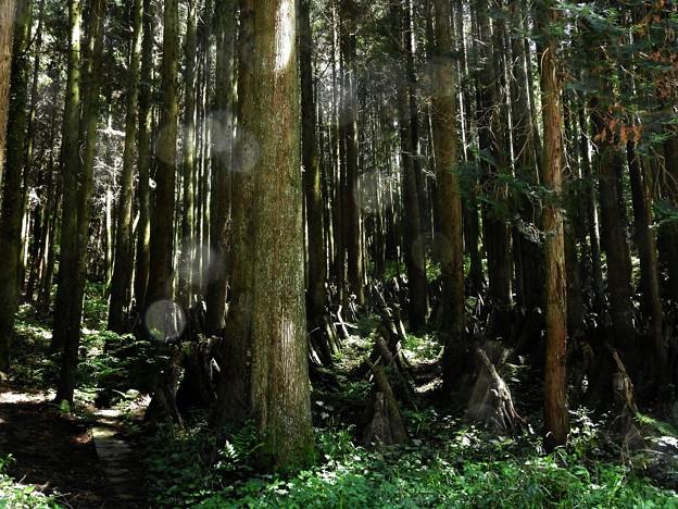 写真: 代太郎の山09