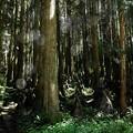 Photos: 代太郎の山09
