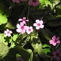 裏山に咲く花々03
