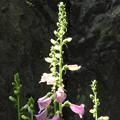 写真: 裏山に咲く花々07