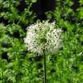 写真: 裏山に咲く花々09