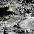 公園内を流れている小川:IMG_0008_R01