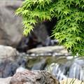 公園内を流れている小川:IMG_0078_R01_R