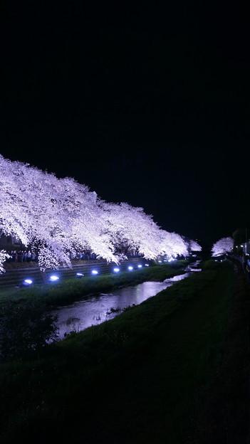 野川ライトアップ