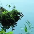 写真: 盆栽