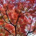 Photos: 今年の紅葉狩り