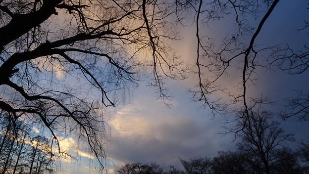 Photos: 冬の日の夕暮れ