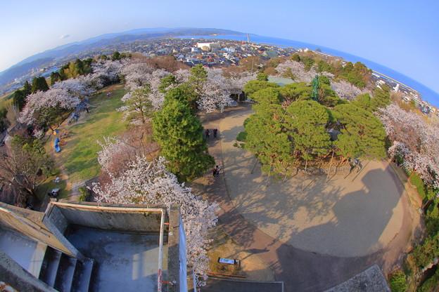 春景:朝日山公園01