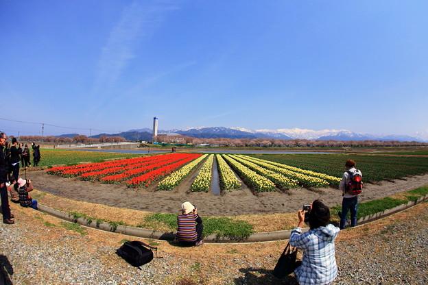Photos: あさひ舟川「春の四重奏」01