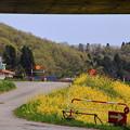 写真: 向こうの黄色