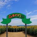 写真: ひまわり村