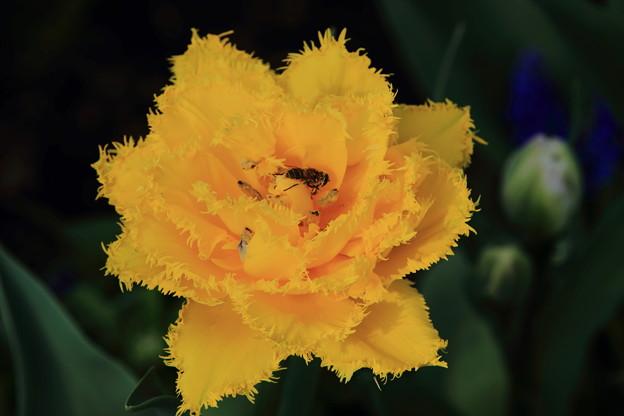 写真: 黄色の迷路