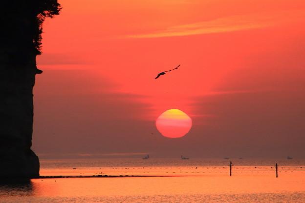 写真: 赤き空を舞う