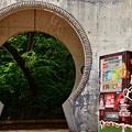 写真: 新緑の古城公園01