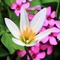 写真: 路地に咲く