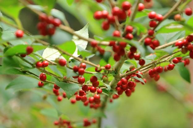 実りの秋 赤