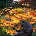 写真: 憂鬱な秋