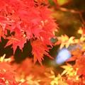 写真: 輝く秋色