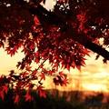 写真: 黄昏紅葉