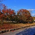 Photos: ご近所秋景