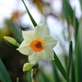 写真: 咲いてるんだ