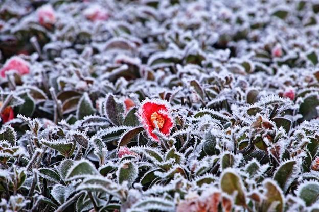 凍てつく朝04