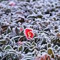 写真: 凍てつく朝04