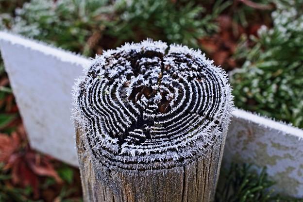 凍てつく朝06