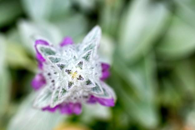 花壇の花 01