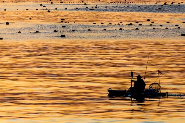 黄金の海原へ