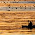 Photos: 黄金の海原へ