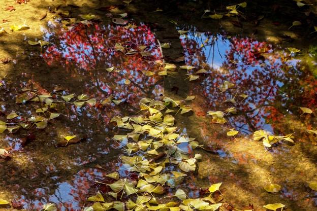 秋の水たまり