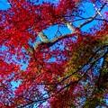 Photos: 紅葉 06