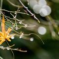 Photos: 秋の残り香