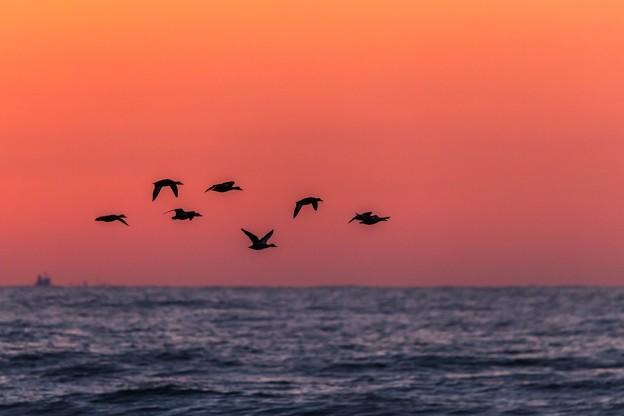 夕焼け空を飛ぶ