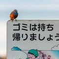 Photos: 捨てちゃダメ