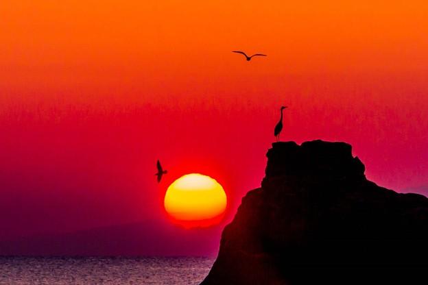 海鳥たちの朝