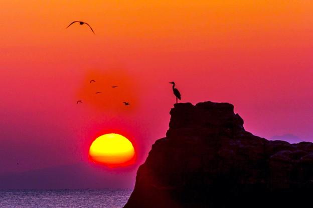 海鳥たちの朝2